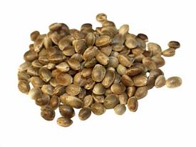 wiet zaden ontkiemen